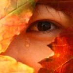 eye autumn leave