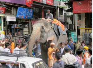 Northern India elephant ride