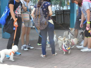 Strollers walk with their pet dogs in Hong Kong